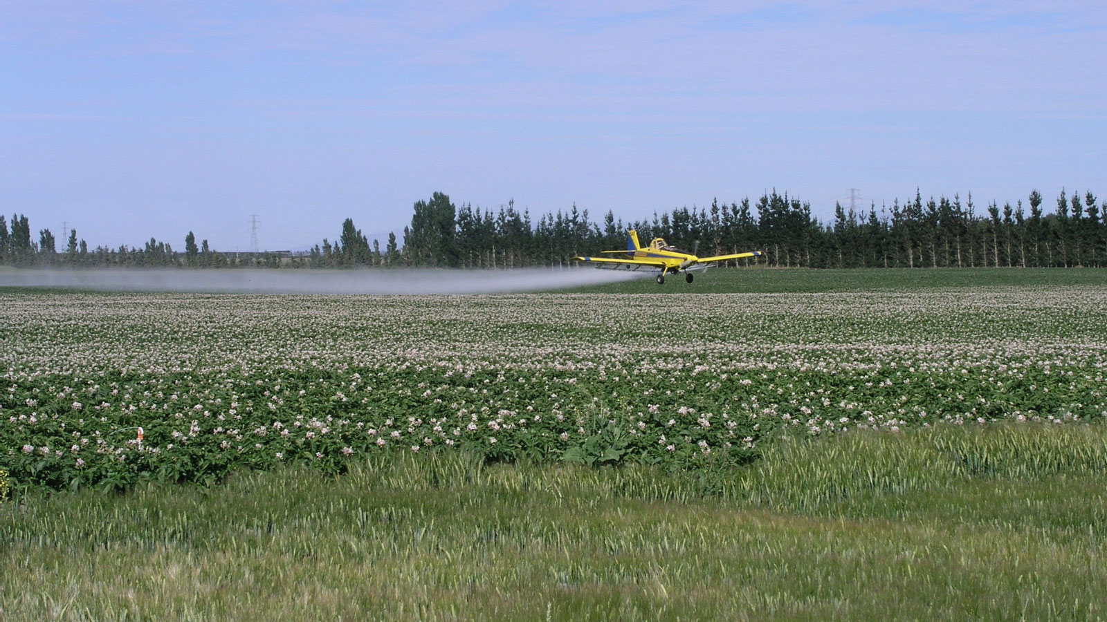 <h4>Chemicals In Farming</h4><p>Dicamba is found in about 1,100 herbicide products. It can only be used on crops that were genetically engineered to be resistant to it, otherwise it will kill them along with the weeds. It easily becomes airborne and drifts away from where it is applied, landing on another farmer's crops and damaging them.</p><em>Public Domain</em>